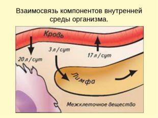 Взаимосвязь компонентов внутренней среды организма.
