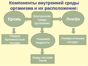 Компоненты внутренней среды организма и их расположение: Внутренняя среда орг