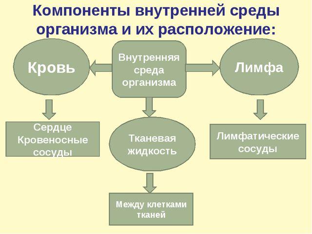 Компоненты внутренней среды организма и их расположение: Внутренняя среда орг...