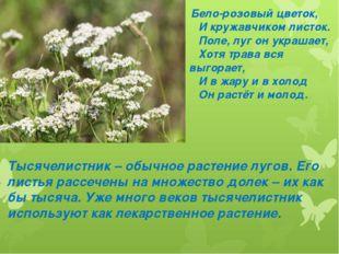 Бело-розовый цветок, И кружавчиком листок. Поле, луг он украшает, Хотя трава