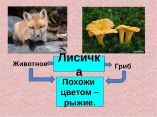 Лисичка Животное Гриб Похожи цветом – рыжие. Слово «лисичка» на слайде содерж