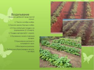 Возделывание 1.Внесение удобрений перед пахотой осенью. 2. Пахота в октябре-н