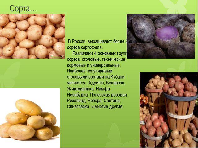 Сорта… В России выращивают более 260 сортов картофеля. Различают 4 основных г...
