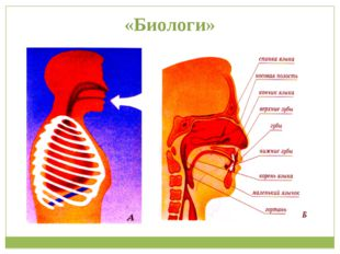 «Биологи»
