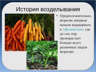 История возделывания Предположительно, морковь впервые начали выращивать в Аф