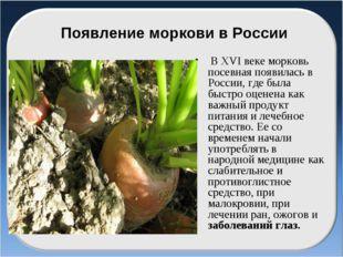 Появление моркови в России В ХVІ веке морковь посевная появилась в России, гд