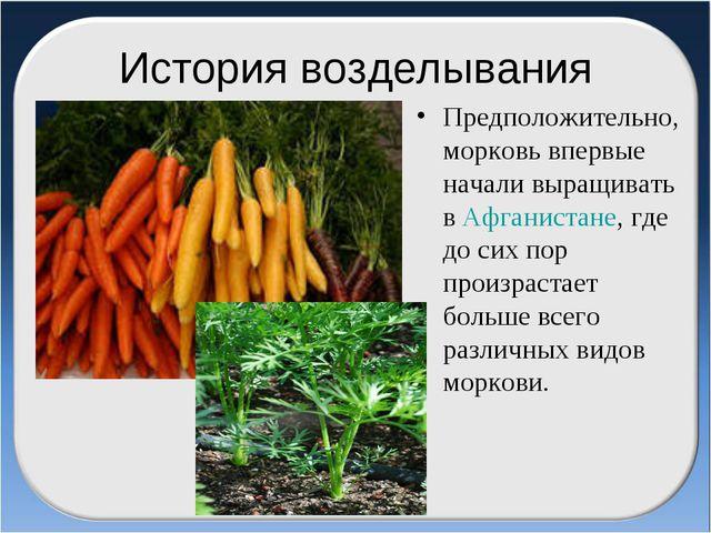 История возделывания Предположительно, морковь впервые начали выращивать в Аф...