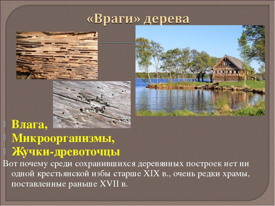 Влага, Микроорганизмы, Жучки-древоточцы Вот почему среди сохранившихся деревя...