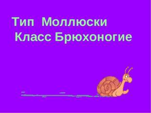 Тип Моллюски Класс Брюхоногие