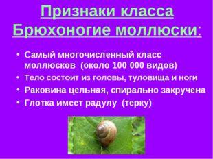 Признаки класса Брюхоногие моллюски: Самый многочисленный класс моллюсков (ок