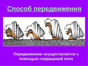 Способ передвижения Передвижение осуществляется с помощью сокращений ноги