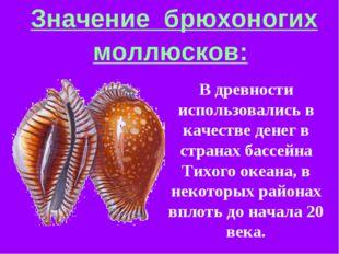 Значение брюхоногих моллюсков: В древности использовались в качестве денег в