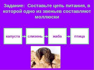 Задание: Составьте цепь питания, в которой одно из звеньев составляют моллюск