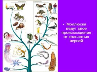 Моллюски ведут свое происхождение от кольчатых червей