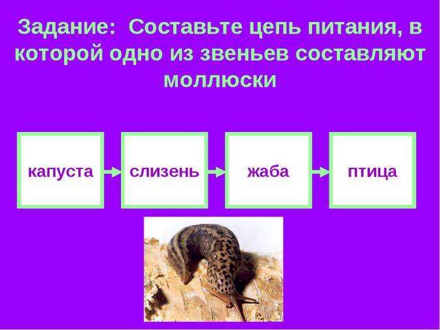 Задание: Составьте цепь питания, в которой одно из звеньев составляют моллюск...