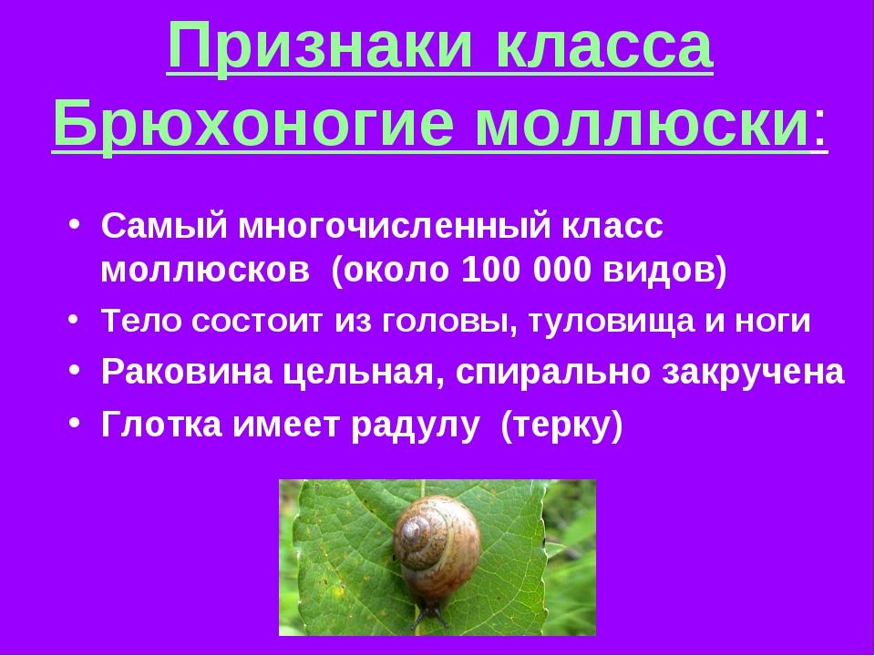 Признаки класса Брюхоногие моллюски: Самый многочисленный класс моллюсков (ок...