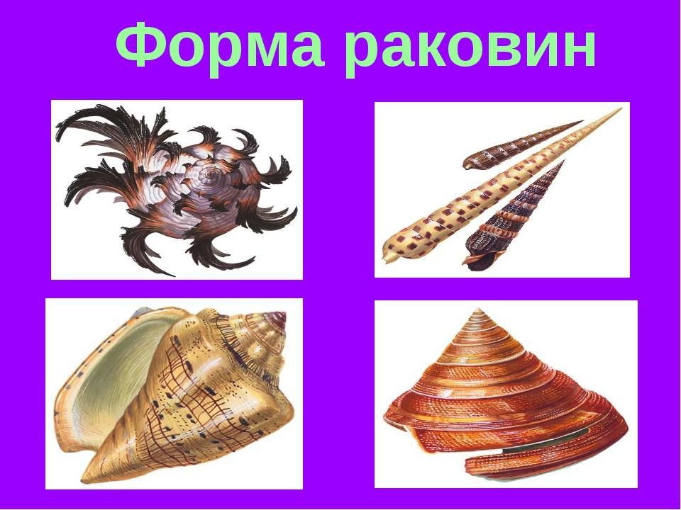 Форма раковин