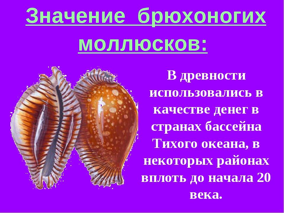 Значение брюхоногих моллюсков: В древности использовались в качестве денег в...