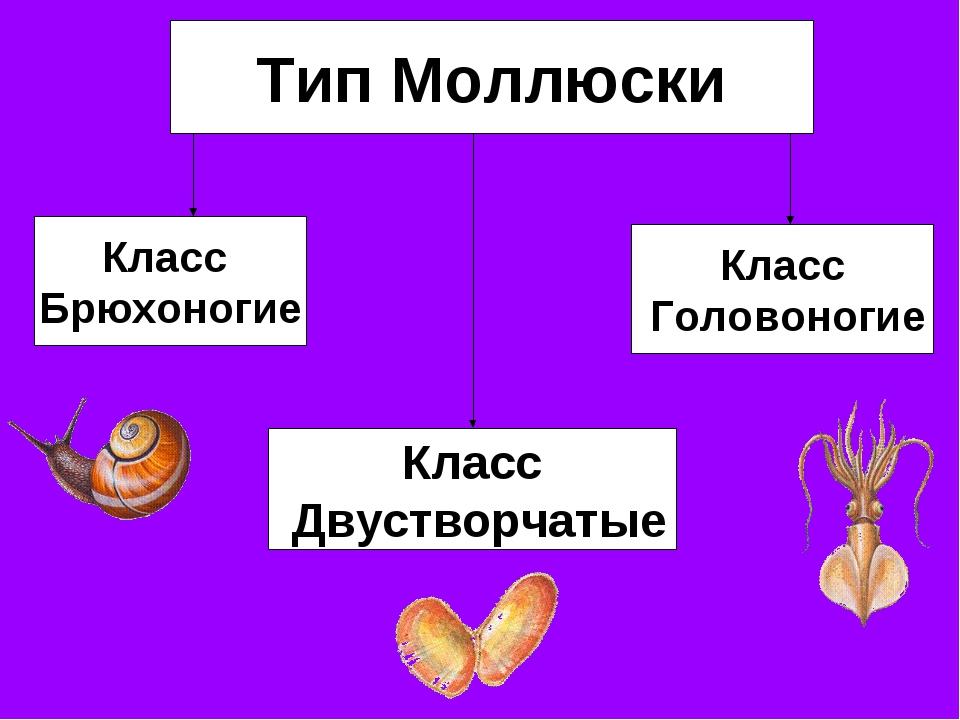 Гдз тесты по биологии на тему моллюски