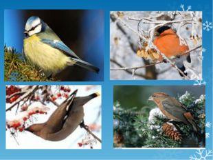 Голодно и холодно зверям и птицам зимой. Но им на помощь всегда придет челове