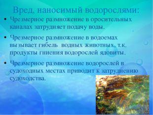 Вред, наносимый водорослями: Чрезмерное размножение в оросительных каналах за