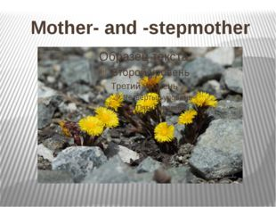 Mother- and -stepmother