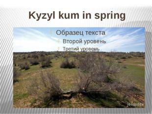 Kyzyl kum in spring