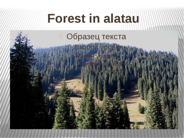Forest in alatau