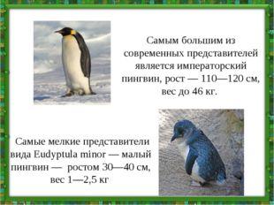 Самым большим из современных представителей является императорский пингвин, р