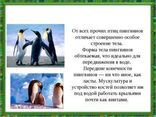 От всех прочих птиц пингвинов отличает совершенно особое строение тела. Форма