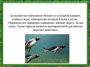 Большинство пингвинов обитают в холодном климате, плавая в воде, температура
