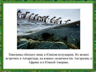 Пингвины обитают лишь в Южном полушарии. Их можно встретить в Антарктиде, на