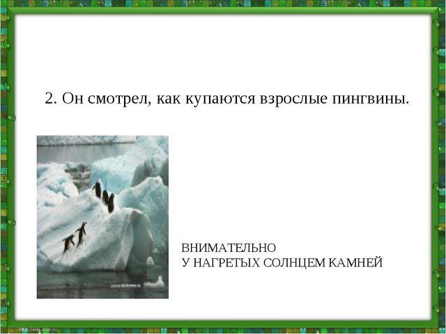 2. Он смотрел, как купаются взрослые пингвины. ВНИМАТЕЛЬНО У НАГРЕТЫХ СОЛНЦЕМ...
