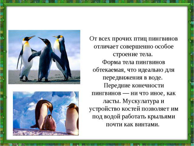 От всех прочих птиц пингвинов отличает совершенно особое строение тела. Форма...