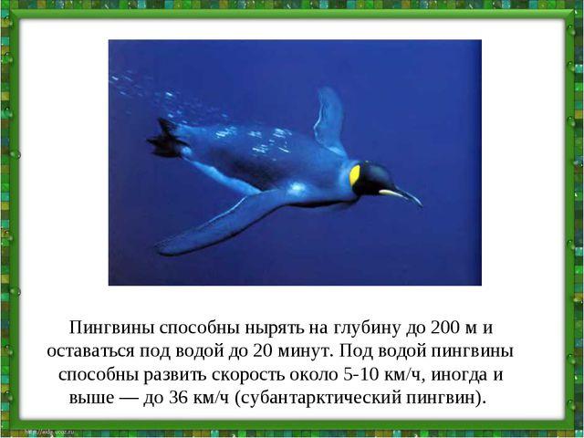 Пингвины способны нырять на глубину до 200 м и оставаться под водой до 20 мин...