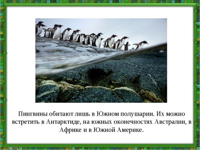 Пингвины обитают лишь в Южном полушарии. Их можно встретить в Антарктиде, на...