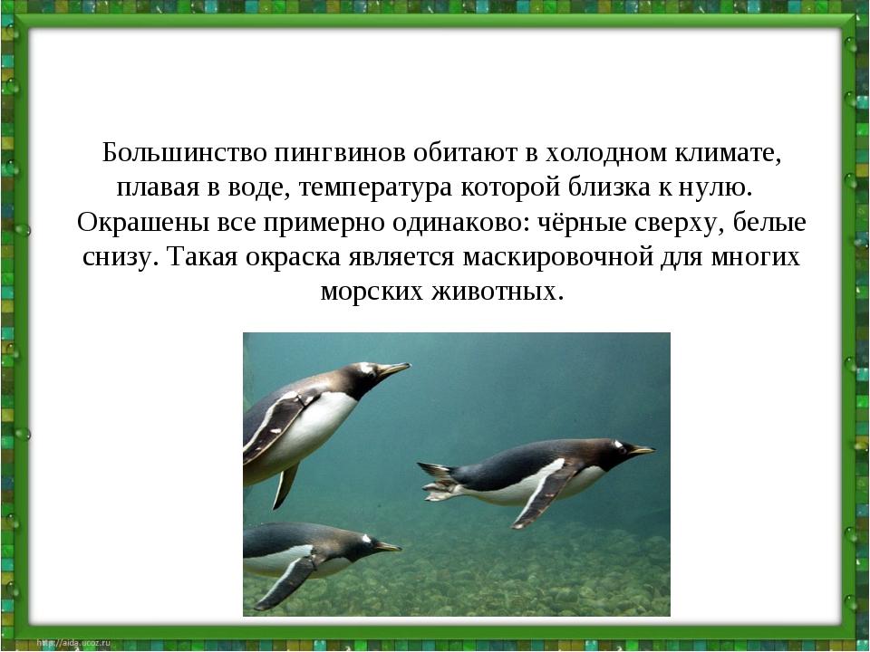 Большинство пингвинов обитают в холодном климате, плавая в воде, температура...