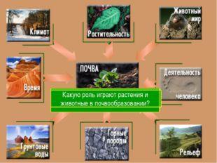 С чего начинается образование почвы? Какие горные породы наиболее распростра