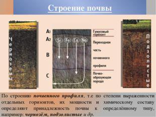 Строение почвы По строению почвенного профиля, т.е по степени выраженности от