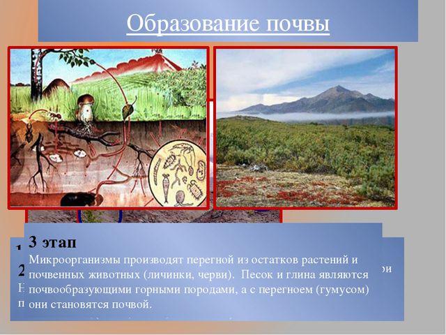 Образование почвы 1 этап Начинается с процесса выветривания (разрушения) горн...