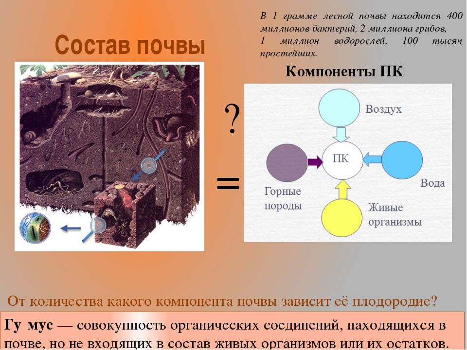 Состав почвы = ? Компоненты ПК От количества какого компонента почвы зависит...