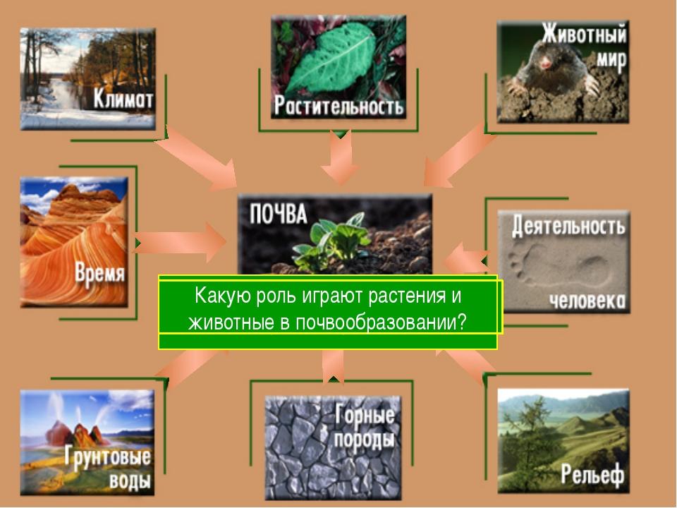 С чего начинается образование почвы? Какие горные породы наиболее распростра...