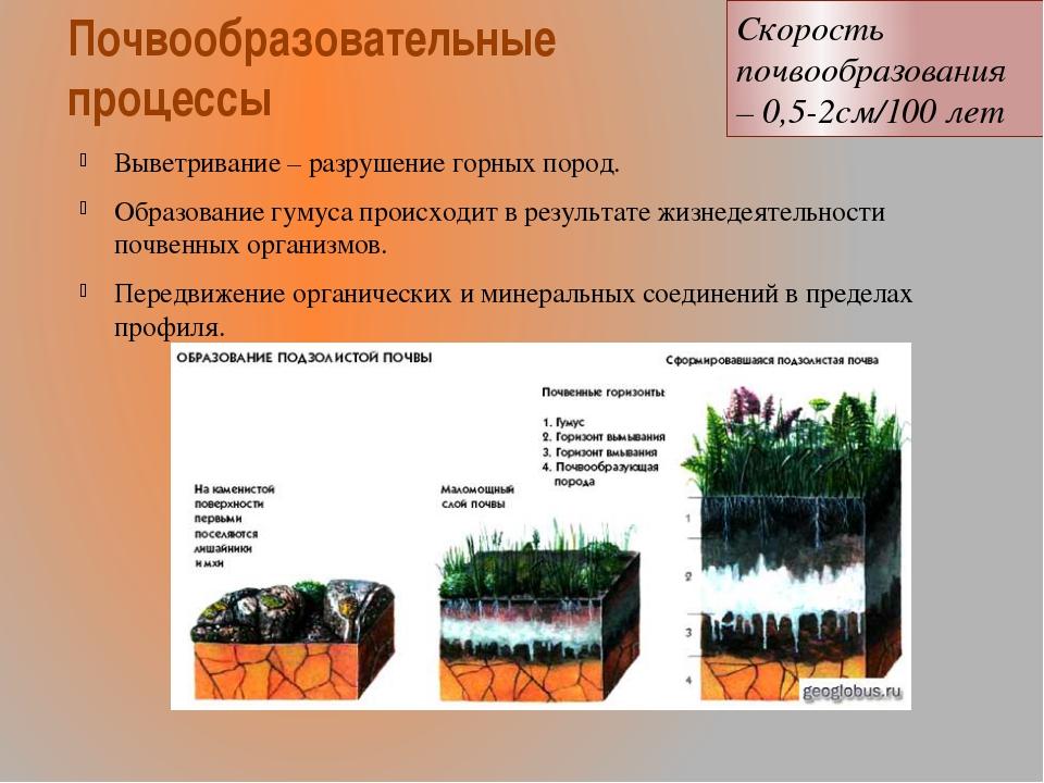 Почвообразовательные процессы Выветривание – разрушение горных пород. Образов...