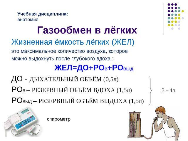 Газообмен в лёгких Жизненная ёмкость лёгких (ЖЕЛ) это максимальное количество...