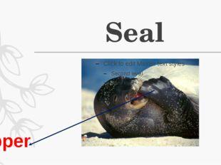 Seal Flipper