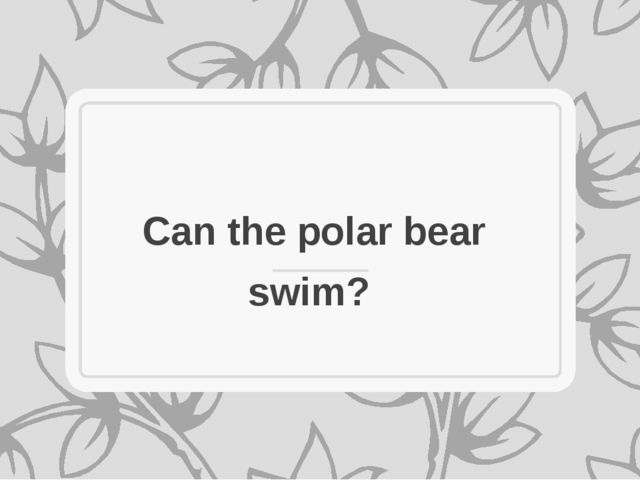 Can the polar bear swim?