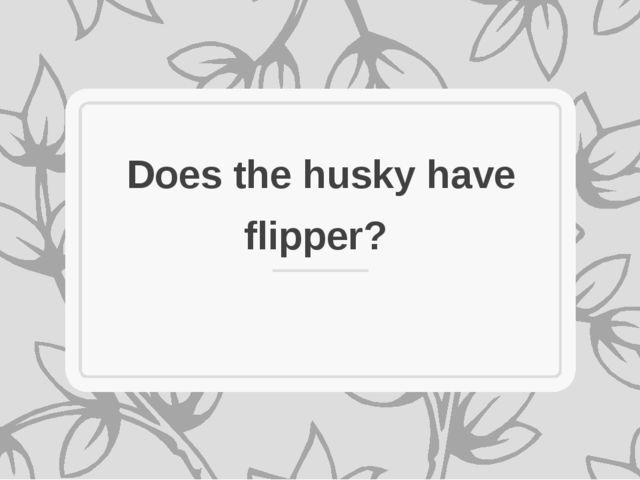 Does the husky have flipper?