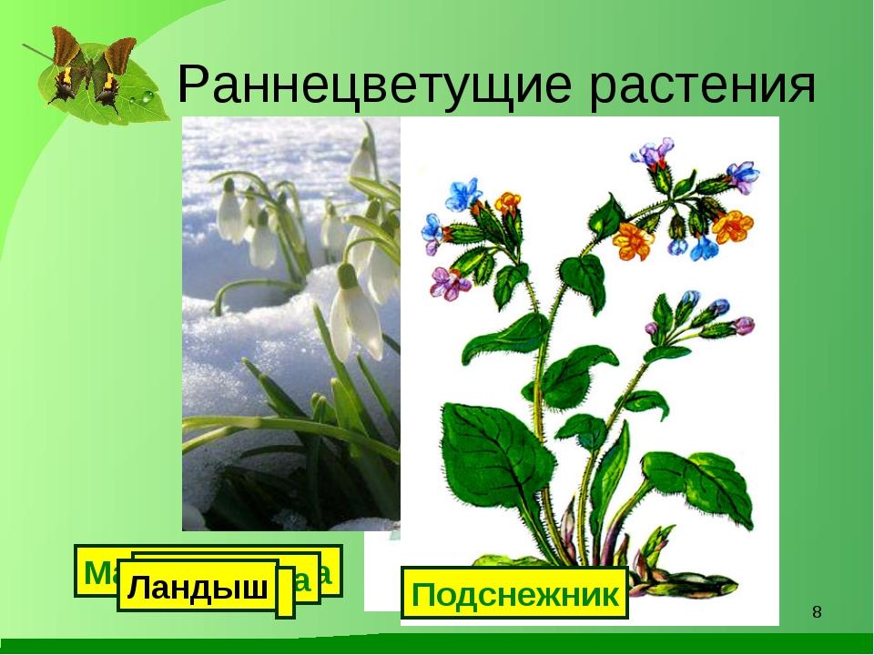 Раннецветущие растения Мать-и-мачеха Подснежник Медуница Ландыш *