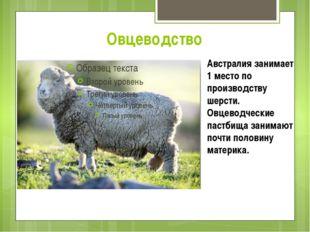 Овцеводство Австралия занимает 1 место по производству шерсти. Овцеводческие