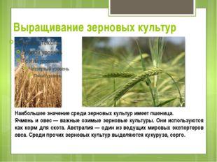 Выращивание зерновых культур Наибольшее значение среди зерновых культур имеет